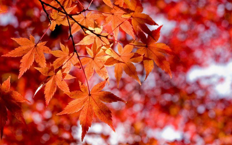 autunno-1-800x500_c